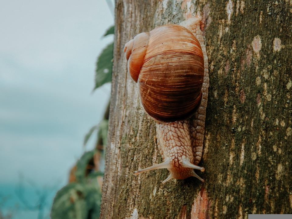 Nature, Beautiful, Snail