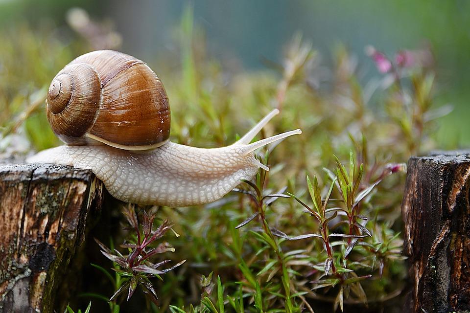 Snail, Garden, Conch, Nature, Animal