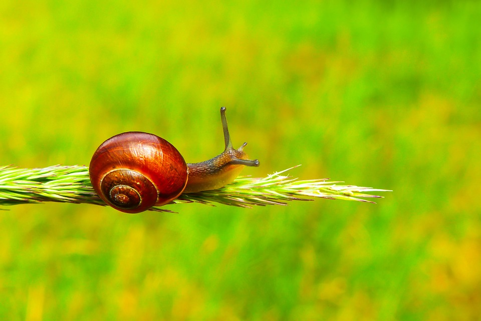Zaroślarka Total, Snail, Molluscs, Animals, Nature