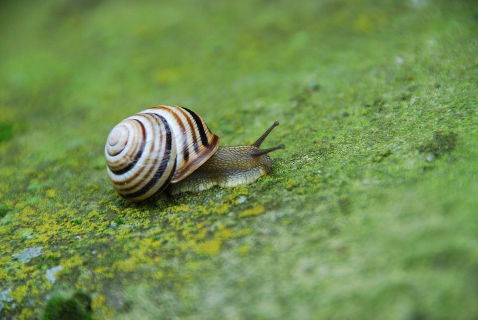 Snail, Seashell, Molluscum, Moss