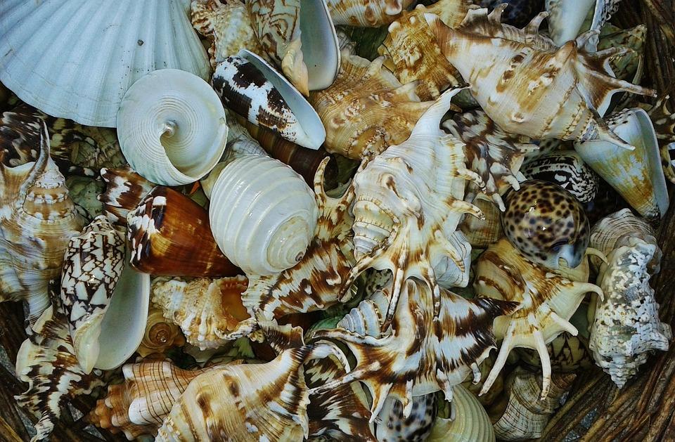 Mussels, Shell, Snail, Close, Snail Shell, Snails