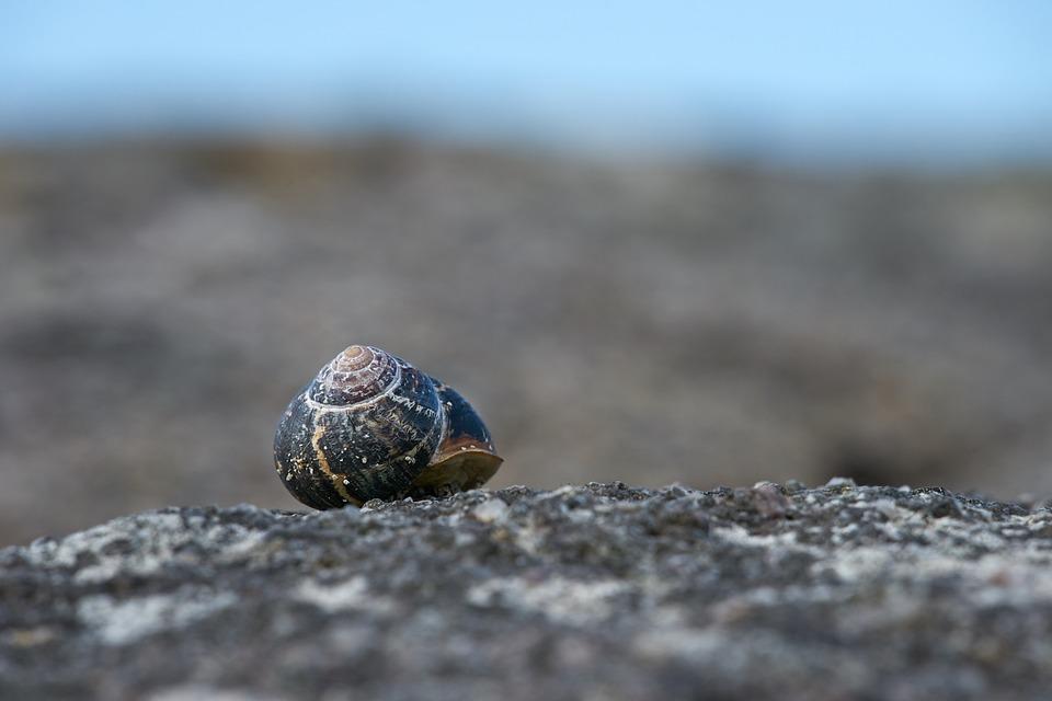 Snail, Ireland, Coast, Sea, Landscape, Nature, Rock