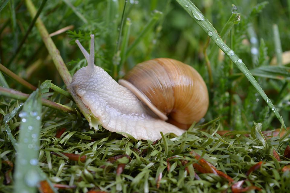 Snail, Grass, Green, Mollusk, Nature, Drops, Water