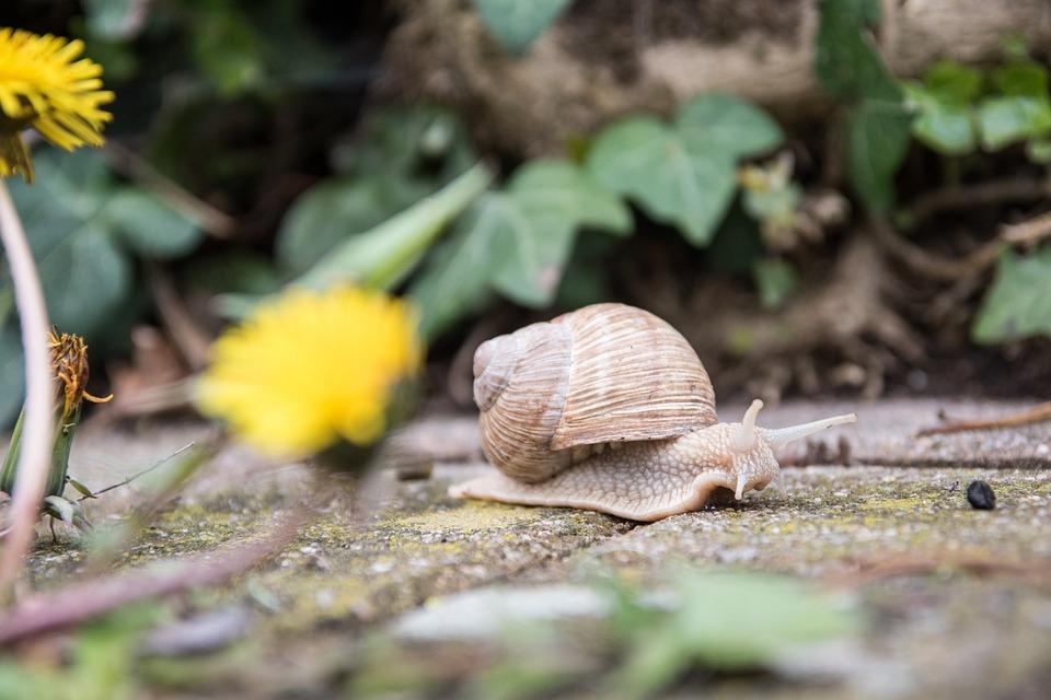 Snail, Nature, Animal, Shell, Crawl, Mollusk, Slowly