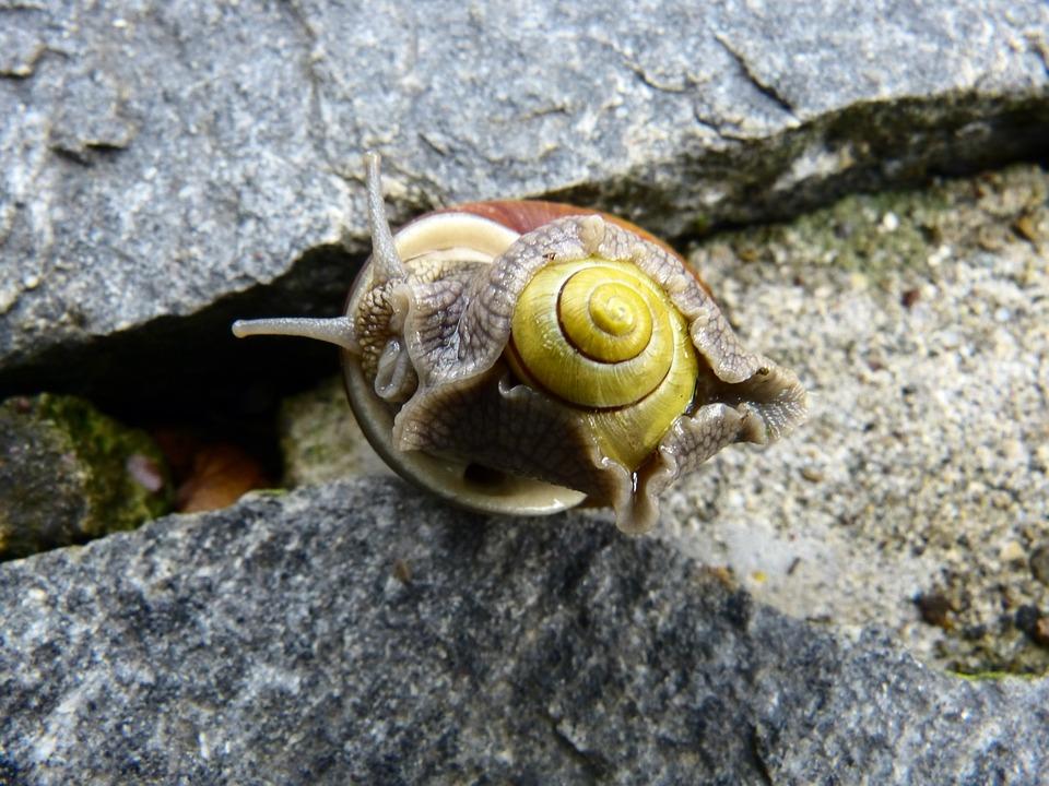 Snail, Pairing, Mollusk, Screw In The Screw