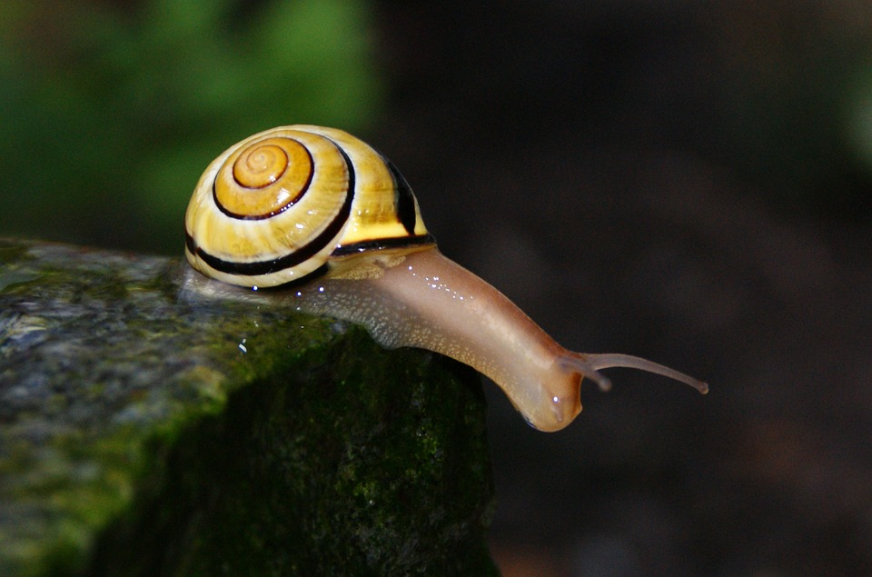 Snail, Shell, Filler, Close, Mollusk, Snail Shells