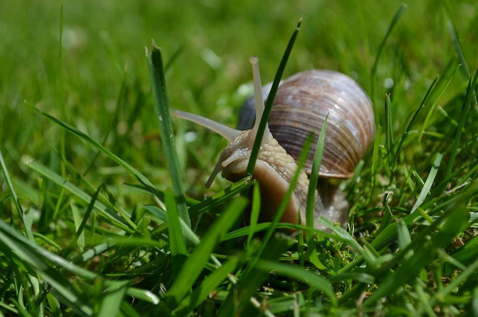 Snail, Mollusk, Shell