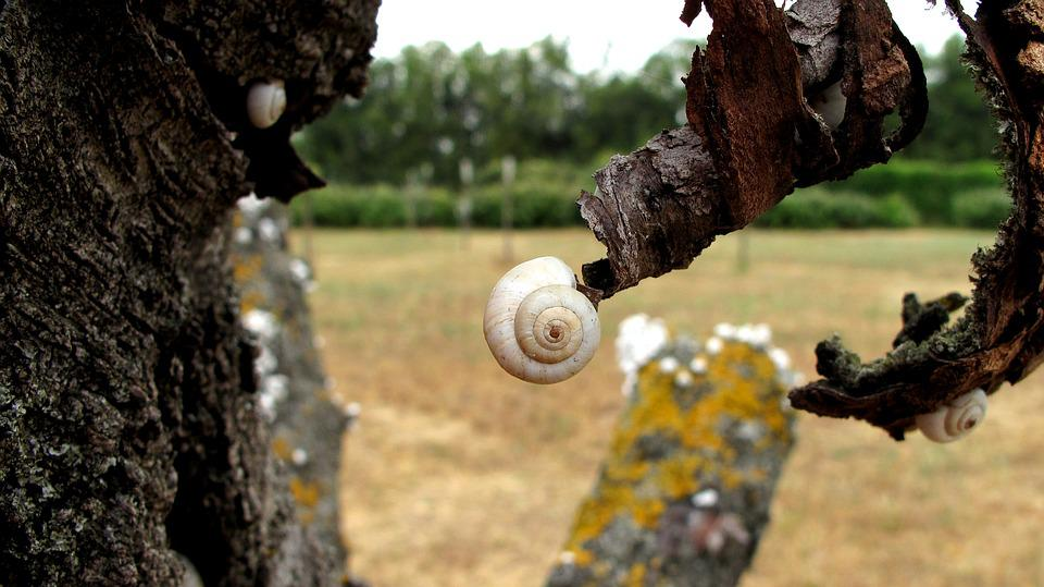 Nature, Snail, Shell