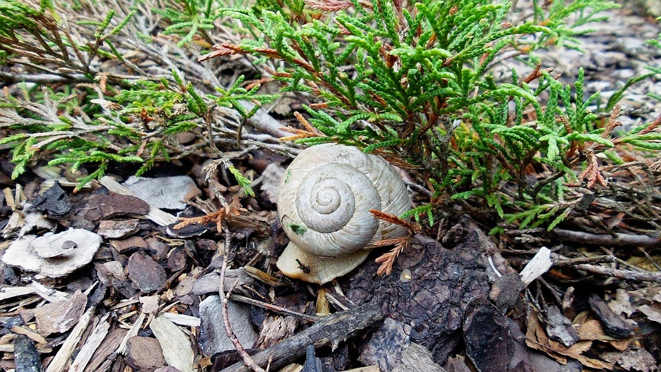 Snail Shell, Worm, Nature