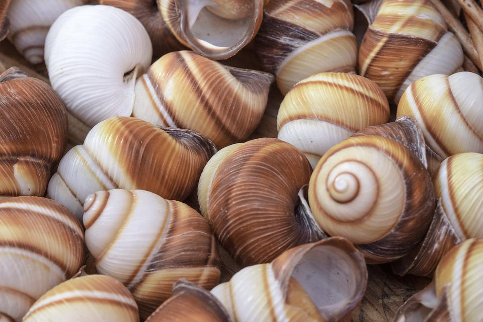 Snails, Shell, Mollusk, Close, Snail, Snail Shell