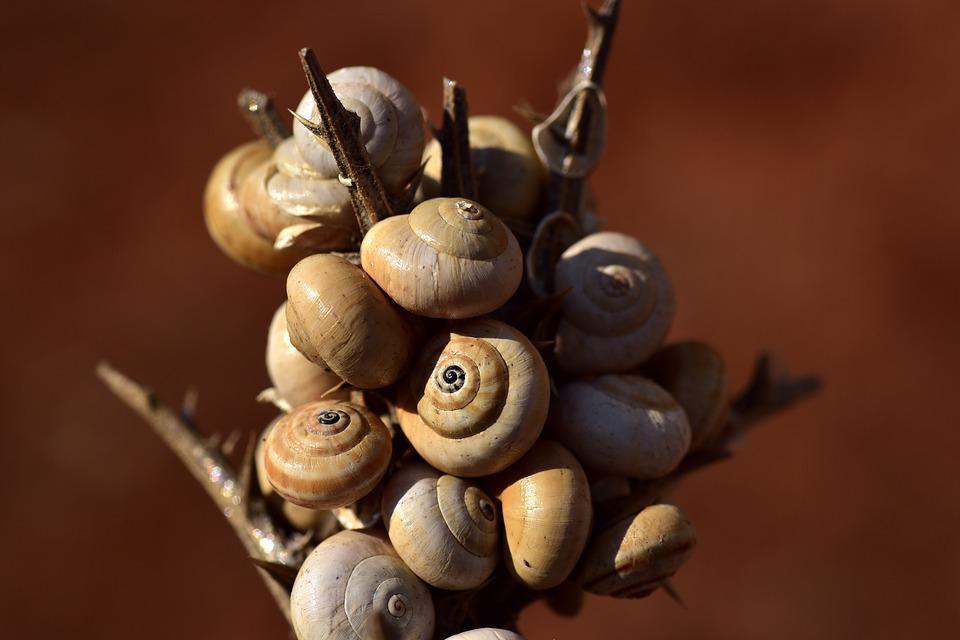 Snail Shells, Spiral, Snail, Close Up, Casing