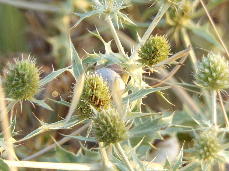 Thistles, Flower, Snail, Plants, Nature, Thorny, Summer
