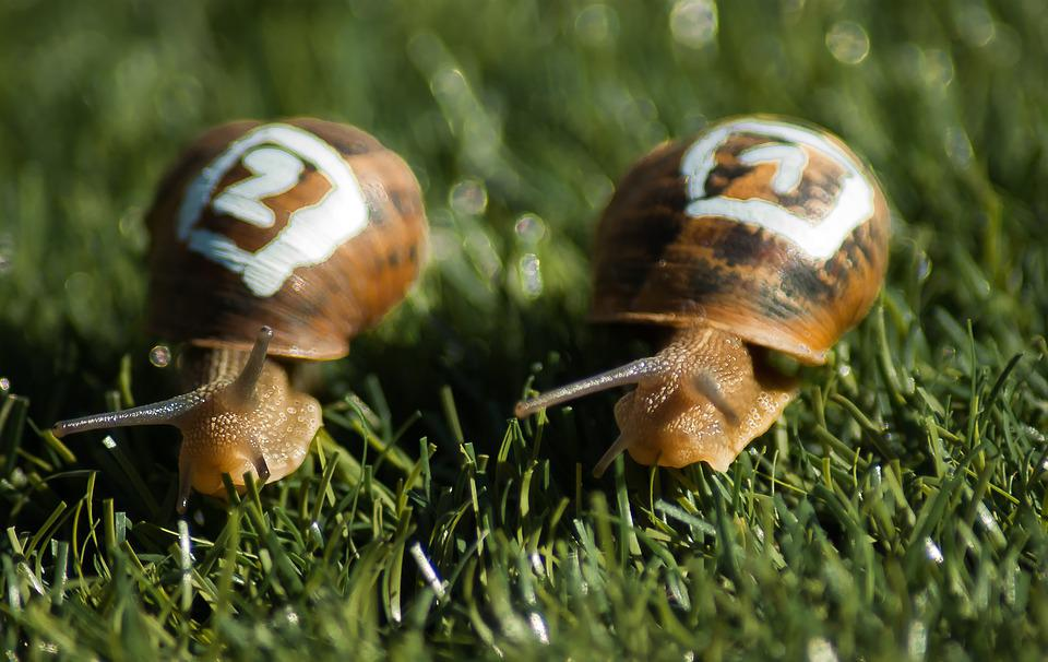 Snails, Race, Gastropods, Shell, Competition, Slow