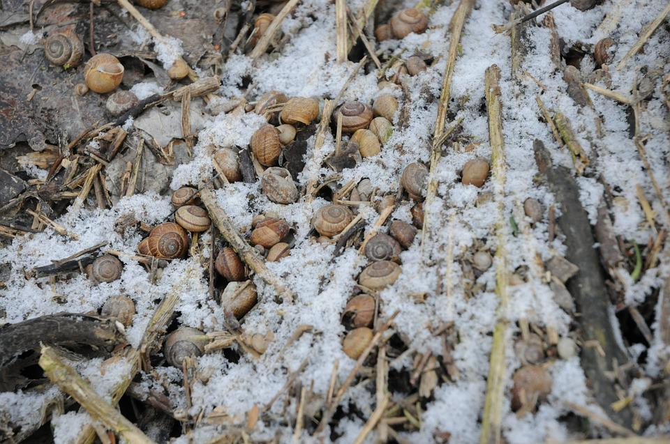 Snow, Snails, Shell, Ground, Forest, Brown, White