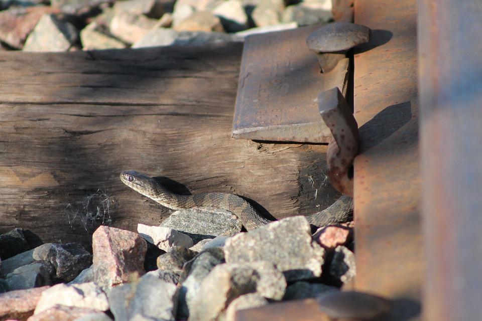 Snake, Rail, Pebble