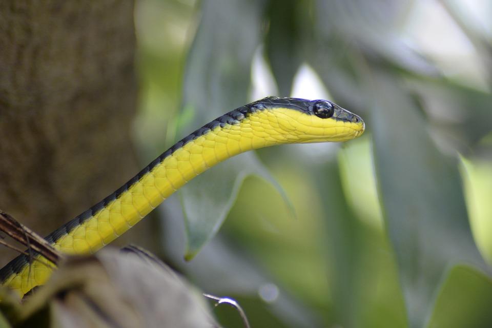 Snake, Animal, Reptile, Wildlife, Nature, Fauna