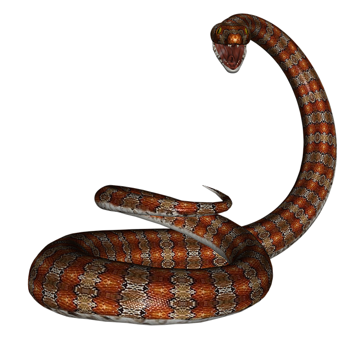 Snake, Rat Snake, Reptile, Red, Herpetology, Serpent