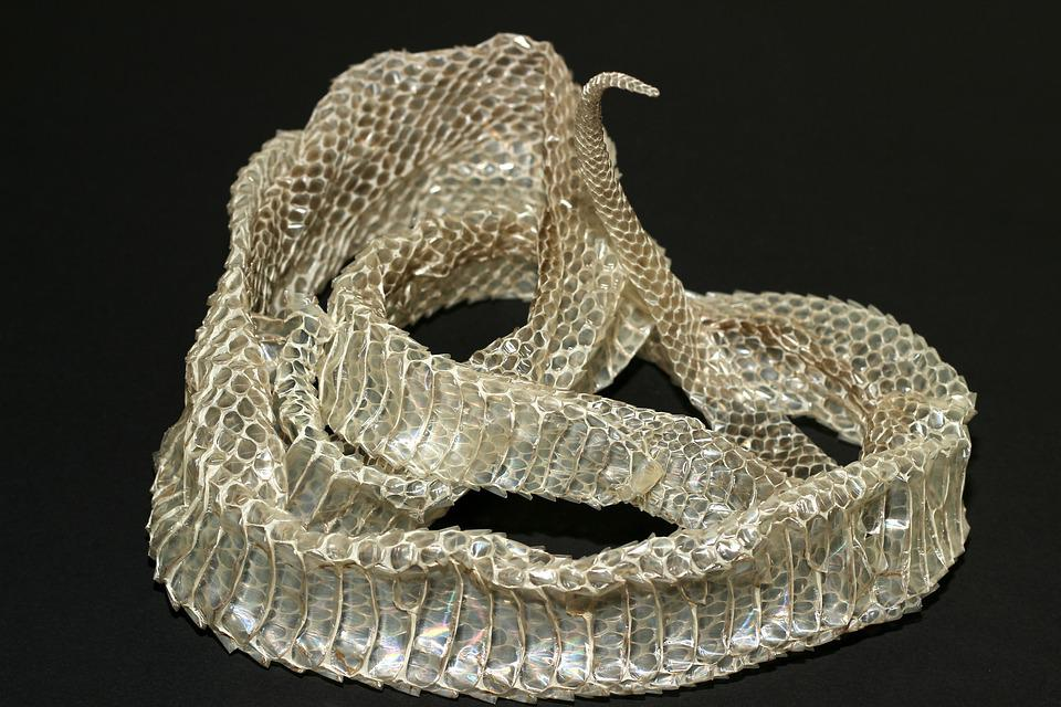 Snake Skin, Scale, Reptile, Close Up, Texture, Pattern