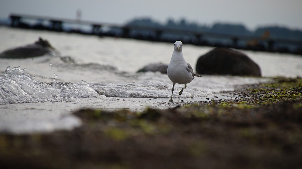 Seagull, Fun, Snapshot