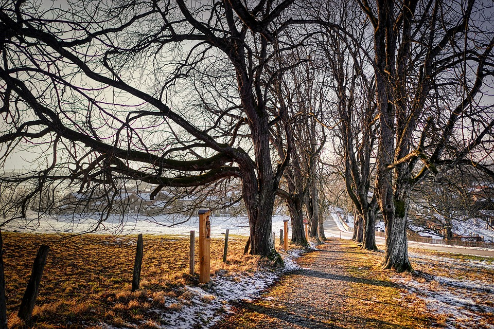Away, Winter, Nature, Cold, Landscape, Tree, Mood, Snow