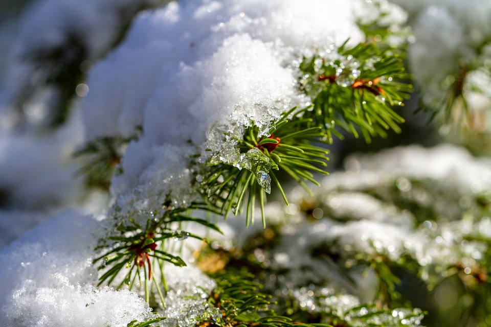 Winter, Snow, Branch, Forest, Cold, Icy, Nature, Wintry