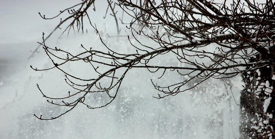 Tree, Winter, Snow, Winter Trees, December, Branch