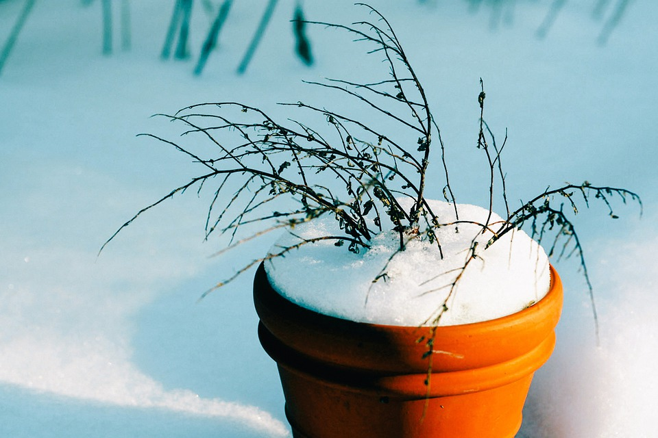 Bucket, Flower Pot, Snow, Winter