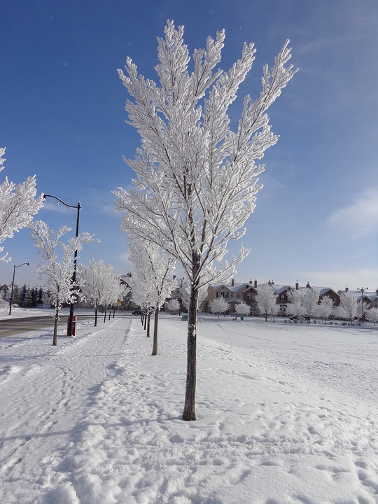 Hoarfrost, Winter, Cold, Blue Sky, Ice, Frost, Snow