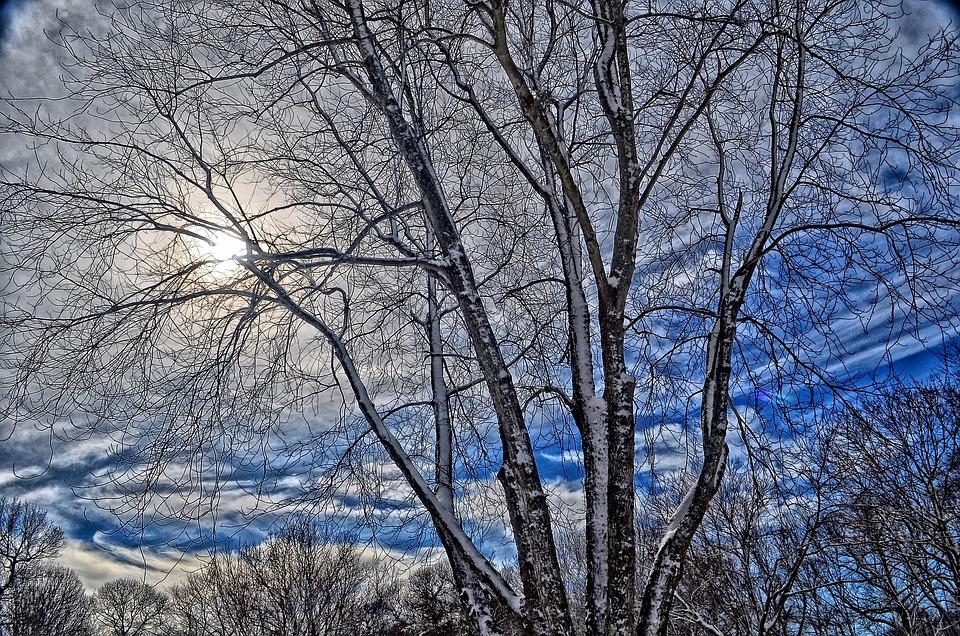 Winter, Tree, Sky, Cold, Snow, Natural, Snowy, Seasonal