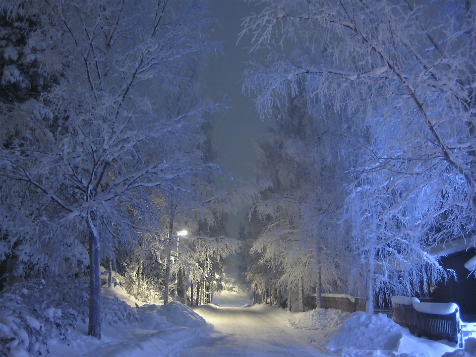 Winter, Snow, Frost, Trees, Blue Shade, Snow Covered