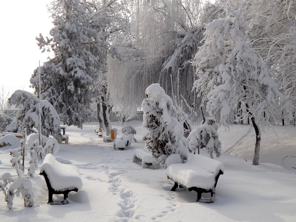 Park, Snow, Bank, Tree, White, Winter, Feerie