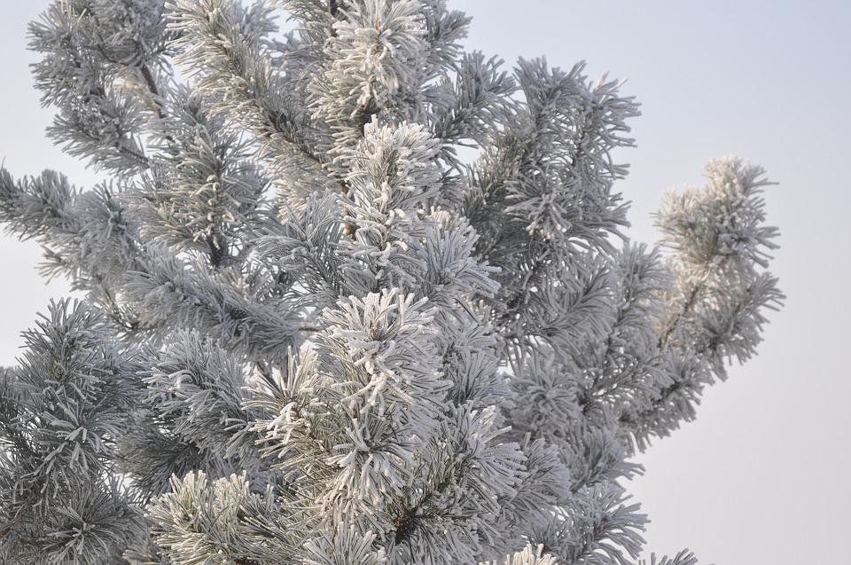 Winter, Tree, Snow, Cold, Landscape, Figure, Nature