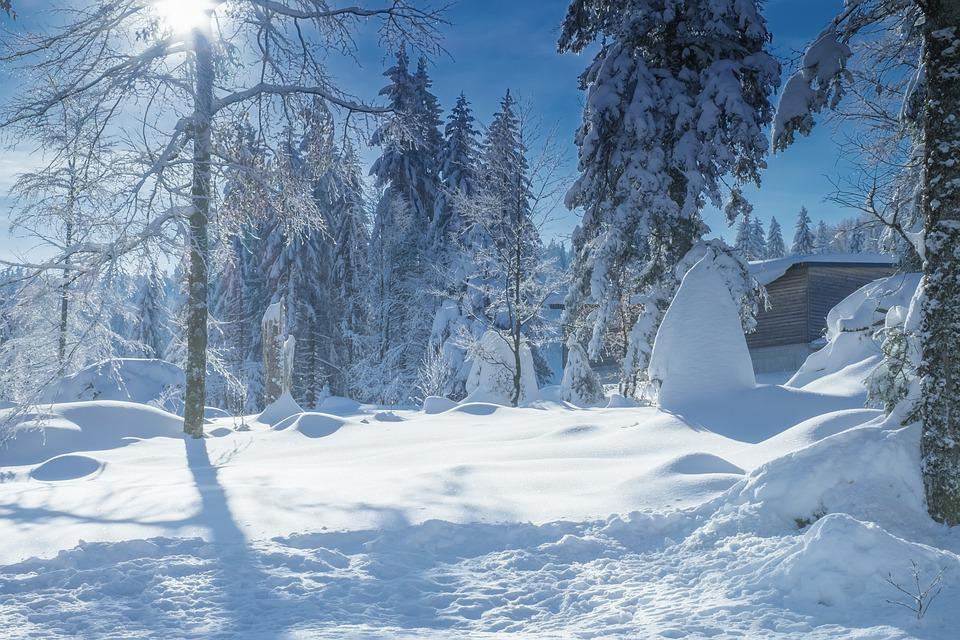 Winter, Snow, Forest, Cold, Wintry, Firs, Snowy