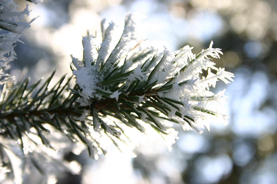 Winter, Frost, Snow, Barr, Branch, Solar