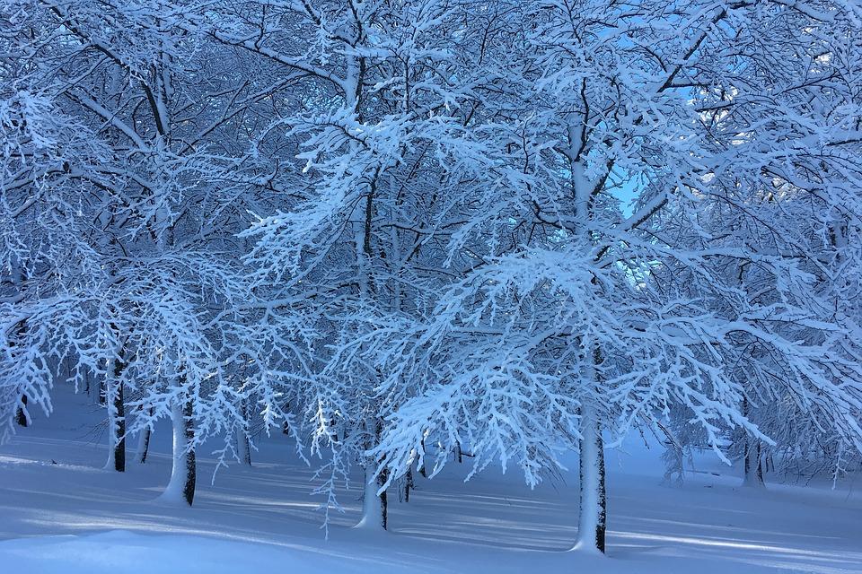 Winter, Snow, Trees, Season, Frost, Bøkeskogen