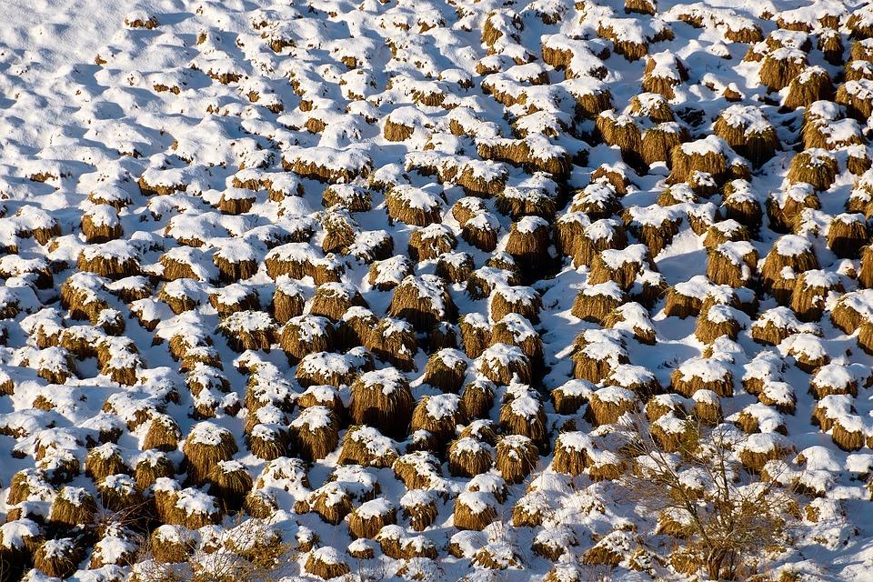 Snow, Meadow, Winter, Ground, Frozen