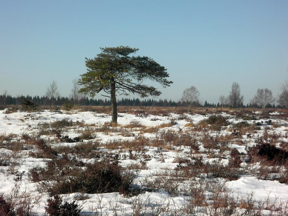 Winter, Moorland, Tree, High Fens, Snow, Sky, Drawing