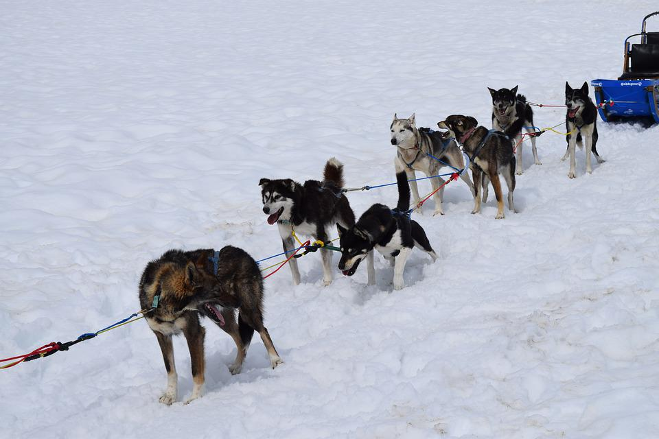 Dogsled, Team, Snow, Huskies, Teamwork, Alaska
