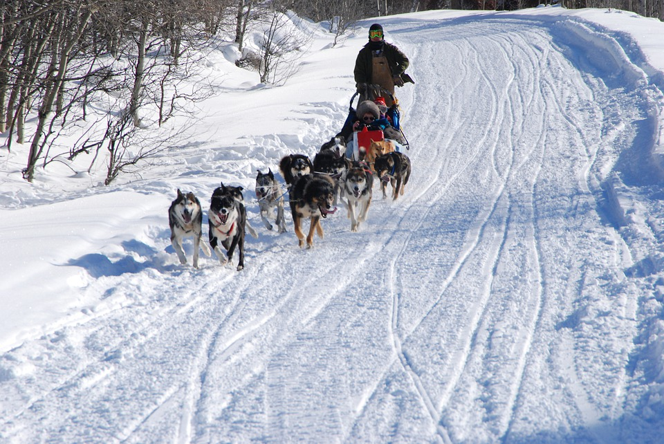 Dog Sledding, Winter, Snow, Husky, Dog, Sled, Cold