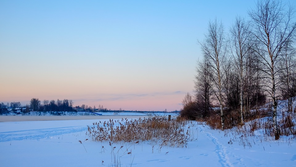 Winter, Snow, Nature, Leann, Coldly, Tree, Landscape