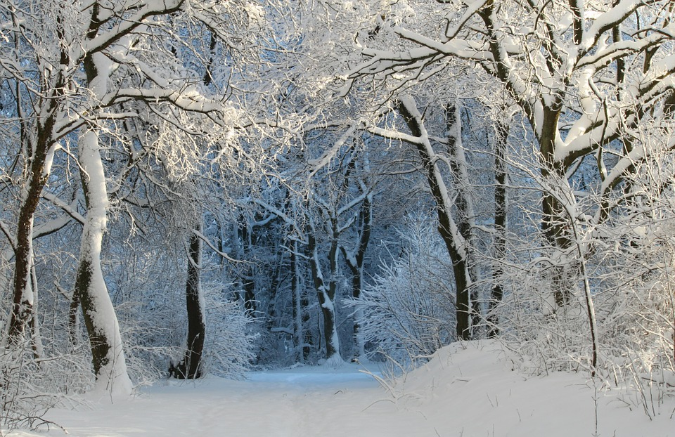 Winter, Wintry, Snow Magic, Winter Magic, Winter Dream