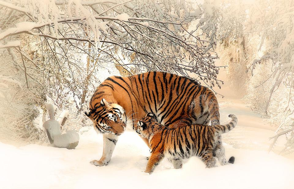 Tigers, Cub, Snow, Trees, Forest, Mother And Child