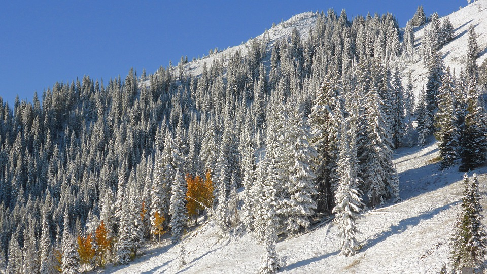 Colorado, Mountain Side, Snow, Landscape, Wilderness