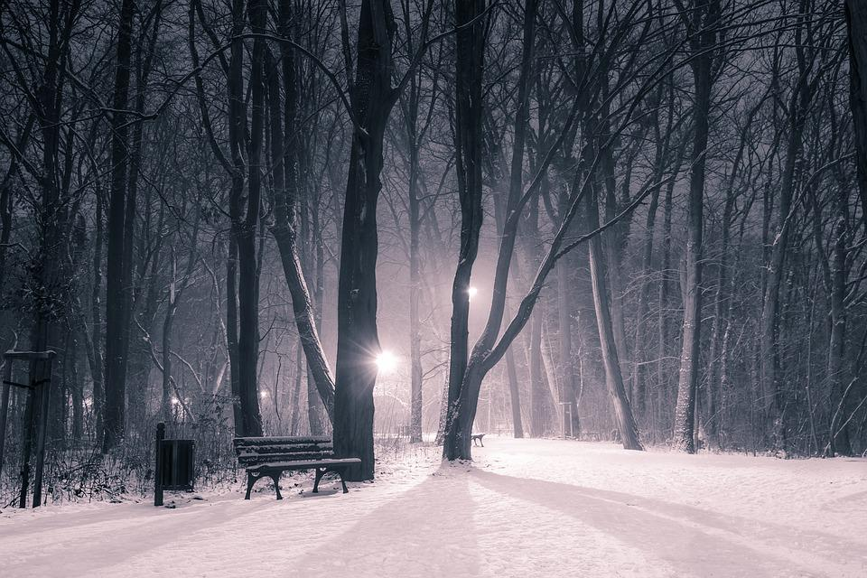Winter, Park, Snow, Night, Shadows, Cryptically
