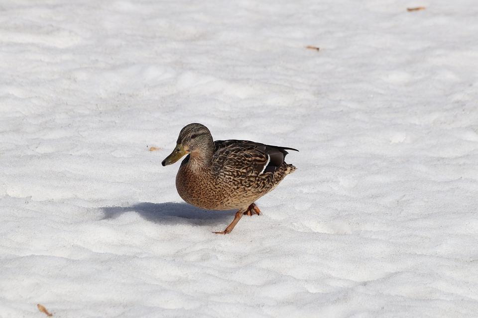 Bird, Winter, Nature, Living Nature, Outdoors, Snow