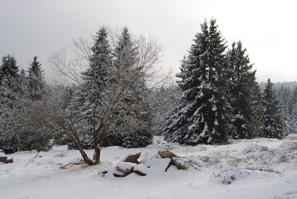 Resin, Torfhaus, Winter, Snow, Wintry