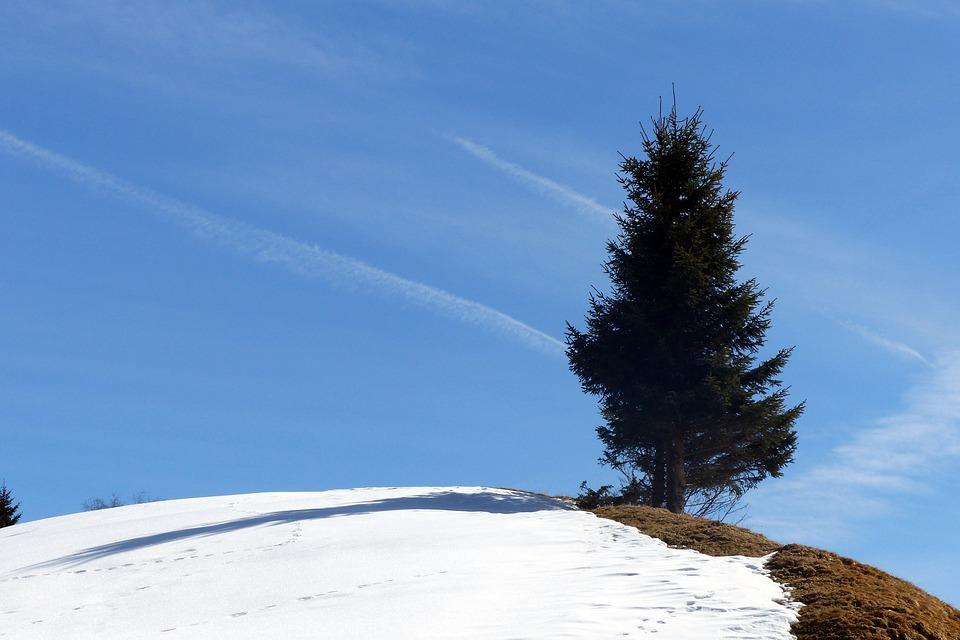 Spruce, Hill, Snow Reste, Late Winter, Azure