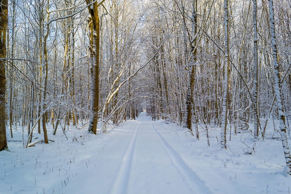 Winter, Traces, Snow, Lane, Road, Forest, Nature, Trees