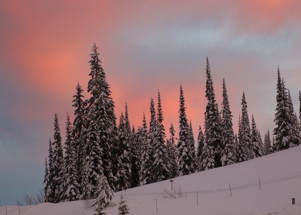 Landscape, Snow Scene, Trees, Winter, Snow, Cold