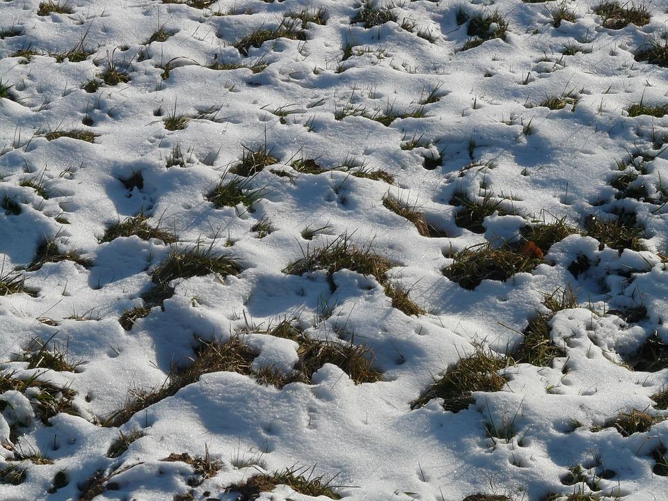 Meadow, Field, Snowy, Snow, Winter, Cold, Frosty